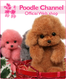 Poodle Channel�ʥס��ɥ�����ͥ��