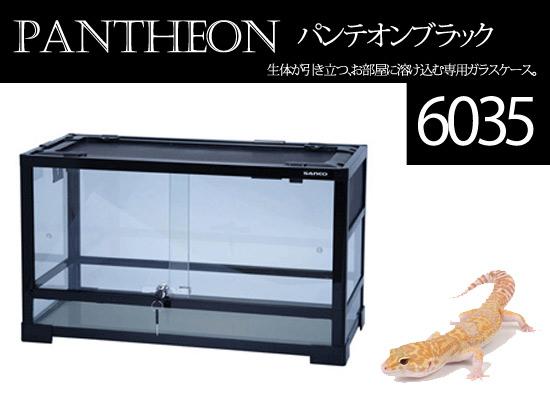 パンテオン6035